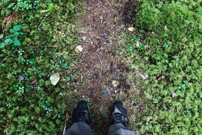 hiking-nature-moss-forest-trail