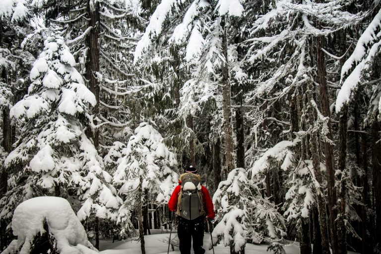 forest-winter-skiing-touring-backcountry-snow-cascades-adventure
