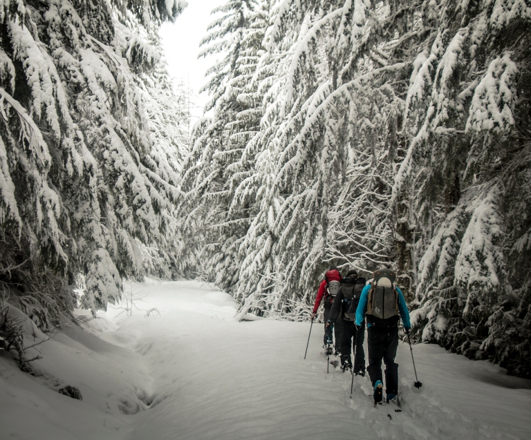 forest-winter-skiing-touring-backcountry-snow-cascades